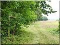 SU7448 : Footpath leaves Wood Hill Lane by Shazz