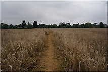 TA2904 : Path leading to New Waltham by Ian S