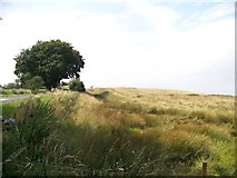 NY9569 : Looking west at the ditch associated with Hadrian's Wall beside the B6318 by Elliott Simpson