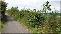 SD6509 : Path in Lostock by Bradley Michael