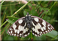 SY6972 : Marbled White Butterfly (Melanargia galathea) by Anne Burgess