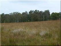 SK2773 : Moorland - woodland edge by John H Darch