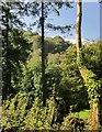 SX2959 : Millway Wood by Derek Harper