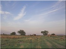 TQ7178 : Evening sky over the Poplars, Cliffe Marshes, September 2014 by Stefan Czapski