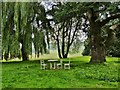 SU8612 : Picnic spot in the grounds of West Dean College by Derek Voller
