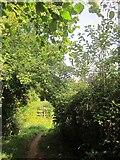 SX9066 : Bridleway approaching Browns Bridge Road by Derek Harper