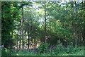 TQ4844 : Park Wood by N Chadwick