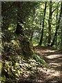 SX2354 : NCN2 in Kilminorth Wood by Derek Harper