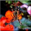 SU1583 : Spider, Town Gardens, Swindon by Brian Robert Marshall