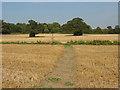 SU9746 : Stubble field, Loseley Park by Alan Hunt
