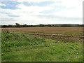 TF9634 : Field near Vinepark Farm by Adrian S Pye