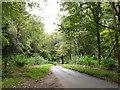 SU7345 : Froyle Lane through Vinney Copse by Robin Webster