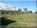 SO6869 : Hop fields by Richard Greenwood
