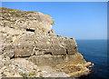 SZ0376 : Cliffs at Tilly Whim Caves by Des Blenkinsopp