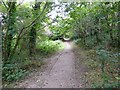 SX4759 : The Co-operative Way in Woodland Woods (2) by David Smith