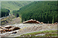 SN8456 : Coniferous forest in Cwm Nant-y-Fedw, Powys by Roger  Kidd