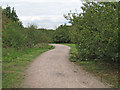 TQ5885 : Path in Thames Chase Forest Centre by Roger Jones