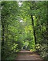 ST5574 : Path and cycle track, Leigh Woods by Derek Harper