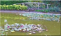 SU9185 : Lilies on the Cliveden Ornamental Lake by Len Williams