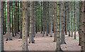 J3269 : Conifers, Clement Wilson Park, Belfast (October 2014) by Albert Bridge