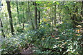 SJ2637 : Woodland Path by Jeff Buck