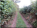 NY3254 : Bridleway at Parson's Thorn by Peter Wood