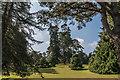 SY0785 : Pine Plantation, Bicton Park Botanical Garden, Devon by Christine Matthews
