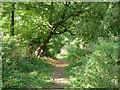 SU2595 : Footpath down Badbury Hill by Robin Webster