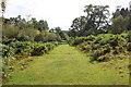 SJ2737 : Woodland Walk at Chirk Castle by Jeff Buck