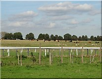 TA0139 : Hurn - the northernmost part of Beverley Westwood by Neil Theasby