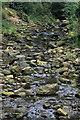 NZ8202 : Eller Beck, Beck Hole, upstream view by Pauline E
