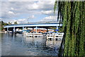 SU8985 : Cookham Bridge by N Chadwick