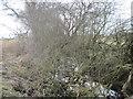 SE7657 : Keldsike  Beck  rather  overgrown by Martin Dawes