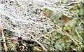 J3370 : Webs, Lagan Meadows, Belfast (October 2014) by Albert Bridge