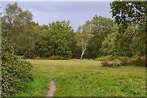 SU8359 : Stormy skies near Hayward's Cottage by David Martin
