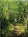 SX8963 : Footpath in the Cockington valley by Derek Harper