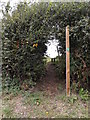 TM1058 : Footpath off Fen Lane by Adrian Cable