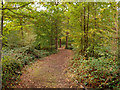 TL4407 : Path in Parndon Wood Nature Reserve by Roger Jones