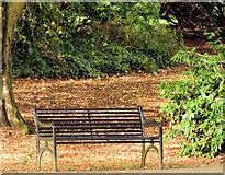 J3170 : Autumn seat, Musgrave Park, Belfast (October 2014) by Albert Bridge