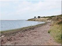 SY6478 : Beach at Lynch Cove, near Weymouth, Dorset by Derek Voller