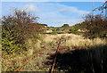 NU1233 : Easington Quarry Branch Line by Chris Heaton