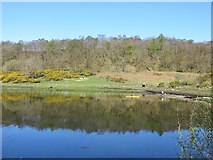 NM9247 : Kayak, Dallens by Richard Webb
