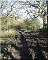 SP0677 : Churned-up bridleway, Walker's Heath Recreation Ground by Robin Stott