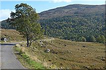 NH2733 : Tree and the Mullardoch road by Nigel Brown