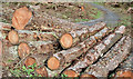 J3469 : Felled trees, Belvoir Forest, Belfast (October 2014) by Albert Bridge