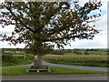 SO3909 : The oak tree at the junction, Bryngwyn by Ruth Sharville