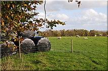 SS8928 : West Somerset : Grassy Field & Sheep by Lewis Clarke