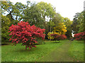 SE2585 : Autumn colours at Thorp Perrow by Oliver Dixon