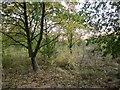 SK7336 : Woodland near the Whipling by Derek Harper