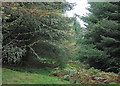 NS0029 : Forest ride above Monamore Glen by Trevor Littlewood